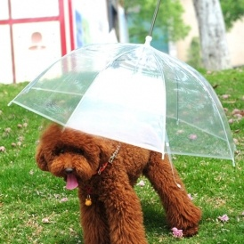 Umbrella For Dogs £5.99 Delivered