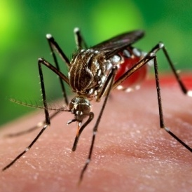 Zika Virus Risk To Pregnant Women In Florida