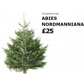 Buy a 25 christmas tree at ikea and get a 20 ikea voucher for Buy ikea voucher online