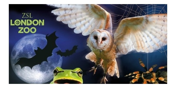 Discounted Entry to London Zoo For Half Term Halloween Activities @ Little Bird