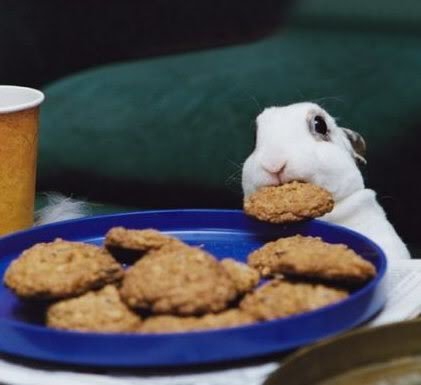 rabbit_cookie