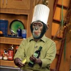 Monkey-Cooking--10525