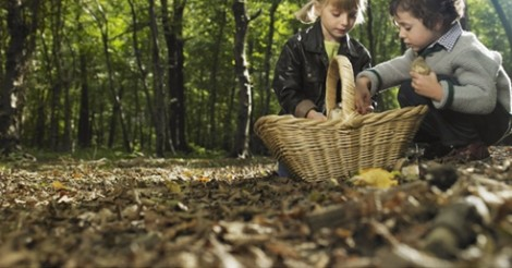 foraging for wild food in the city 1