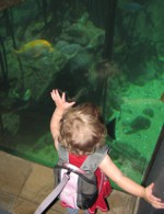 LittleLife Aquarium