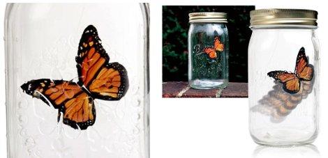 Butterfly in a bottle