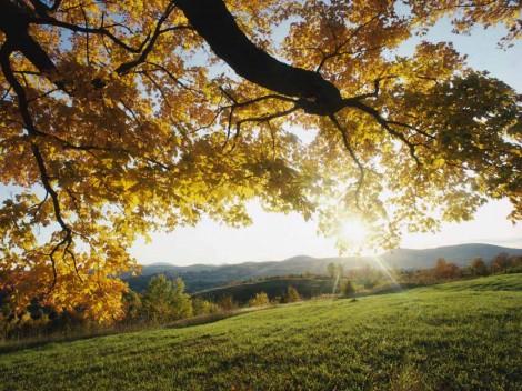 ws_Vista_autumn_leaves_1024