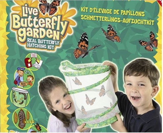 Insect Lore Live Butterfly Garden Review
