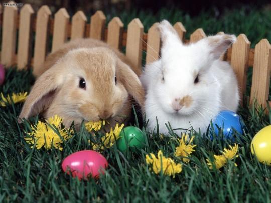 Easter-Bunnies1