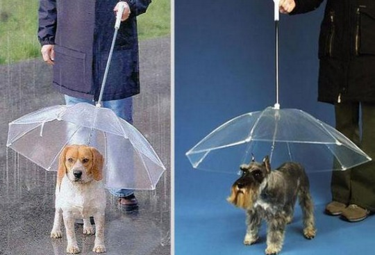 doggy brolly
