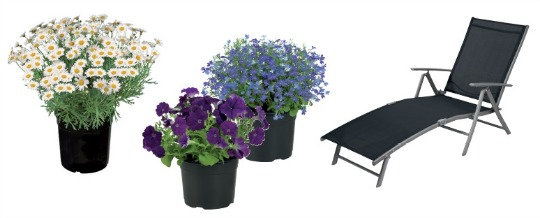 Garden Furniture Flowers Lidl From Thurs 16th April