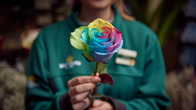 (UF) Morrisons Are Selling Rainbow Roses For Valentine's Day