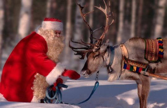 Watch The Reindeer Being Fed @ Reindeer Cam