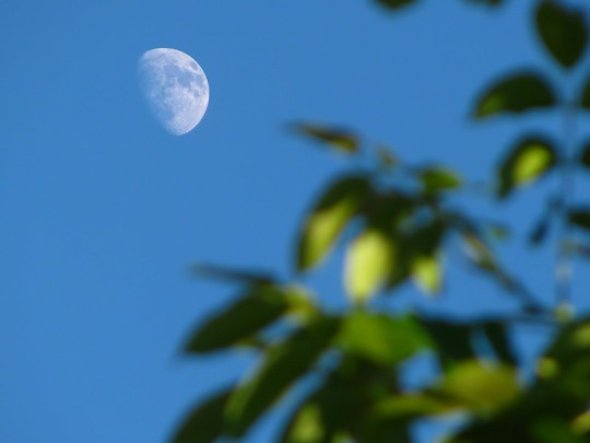 There'll Be A Blue Moon Tonight. No, Really. (Except It's Not Blue.)